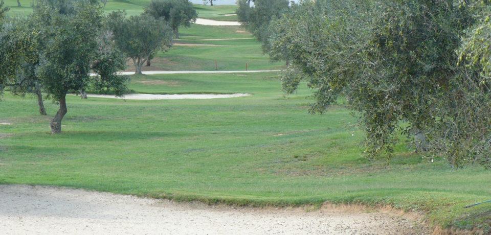 Golf Les Olivier Citrus Hammamet Tunisie