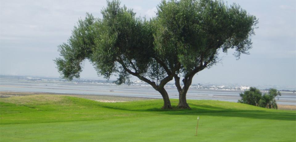 Réservation Tee-Time au Golf Flamingo Monastir Tunisie