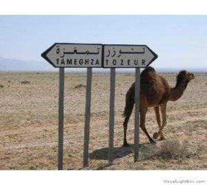 Transfer aéreports Tunisie
