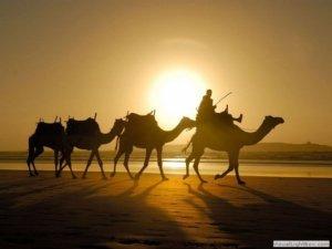 Excursion pour Groupe Tunisie