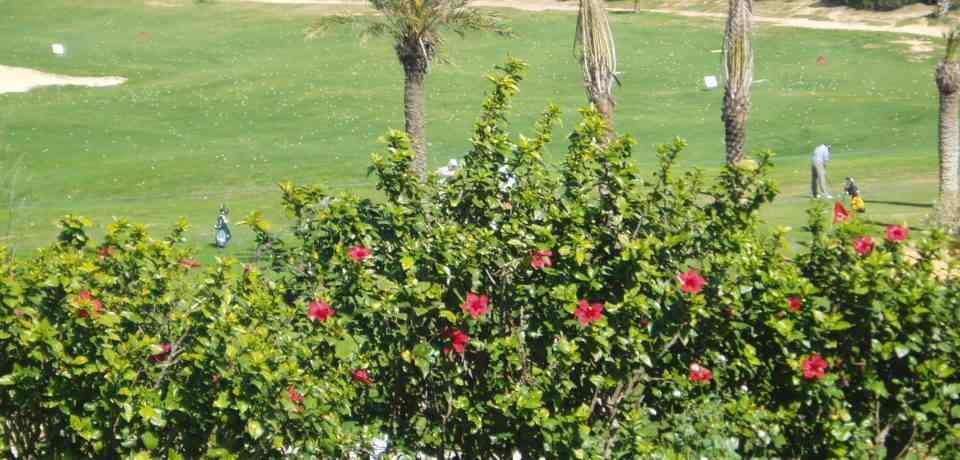 Réservation des cours et Leçons Golf au parcours La Forêt du Golf Citrus Hammamet Tunisie