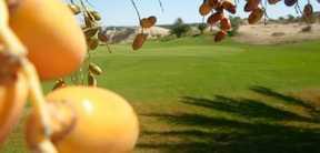 Réservation des Forfait et package au Golf Oasis Tozeur