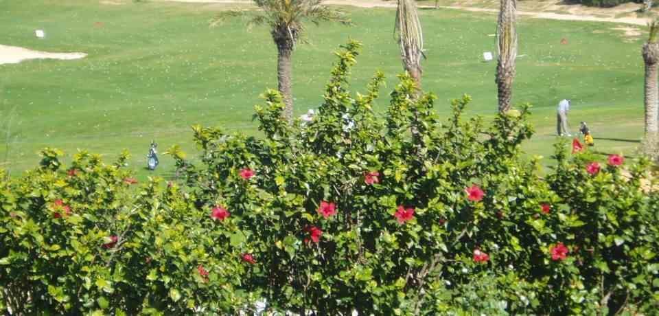 Réservation des cours et Leçons Golf à l'école du Golf Citrus Hammamet Tunisie