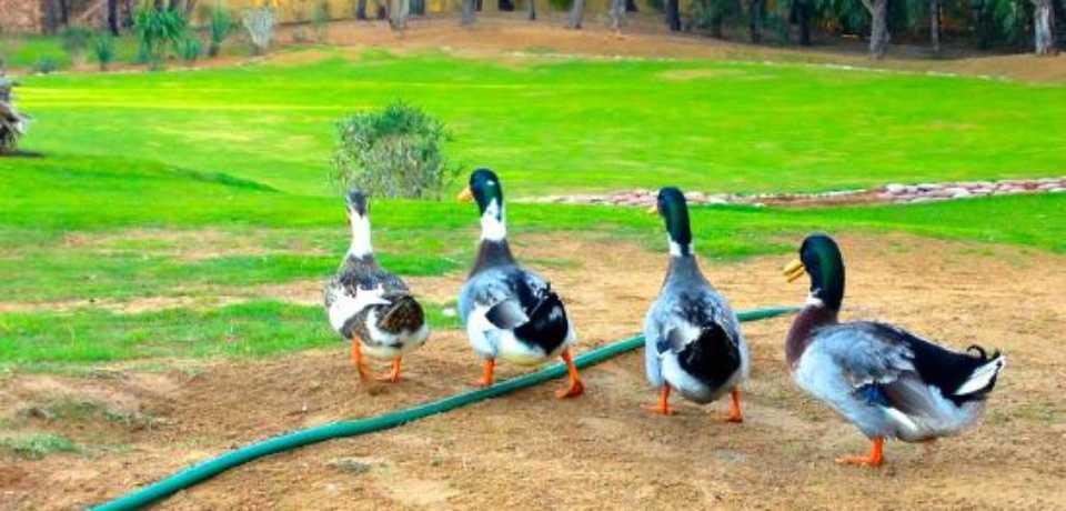 Golf Training Center à Agadir Maroc